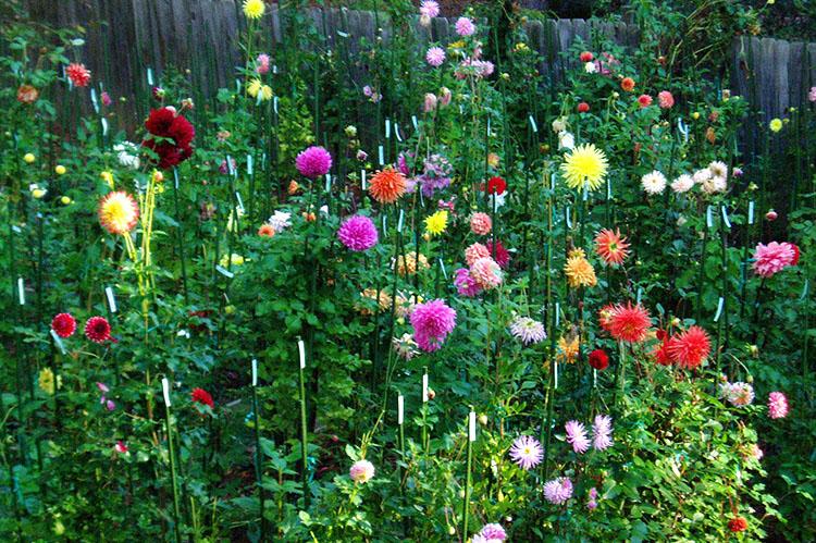 Member Gardens